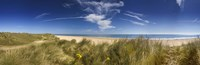 """Marram Grass, dunes and beach, Winterton-on-Sea, Norfolk, England by Panoramic Images - 36"""" x 12"""""""