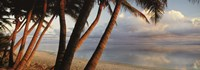 """Palm trees on the beach at sunset, Rarotonga, Cook Islands by Panoramic Images - 36"""" x 12"""" - $34.99"""
