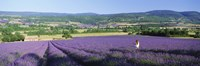 """Woman in a field of lavender near Villars in Provence, France by Panoramic Images - 36"""" x 12"""""""