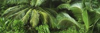 """Palm fronds and green vegetation, Seychelles by Panoramic Images - 36"""" x 12"""""""