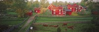 """Traditional red farm houses and barns at village, Stensjoby, Smaland, Sweden by Panoramic Images - 36"""" x 12"""""""