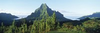 Mountains at a coast, Belvedere Point, Mont Mouaroa, Opunohu Bay, Moorea, Tahiti, French Polynesia Fine Art Print