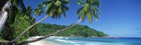 Palm trees on the beach, Anse Severe, La Digue Island, Seychelles Fine Art Print