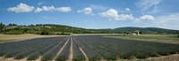 """Lavender fields near D701, Simiane-La-Rotonde, Alpes-de-Haute-Provence, Provence-Alpes-Cote d'Azur, France by Panoramic Images - 36"""" x 12"""""""