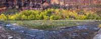 Virgin River at Big Bend, Zion National Park, Springdale, Utah, USA Fine Art Print