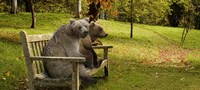 Bears sitting on a bench Fine Art Print