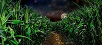 Dark corn field Fine Art Print