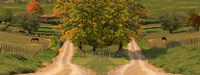 Two dirt roads passing through farms in autumn Fine Art Print