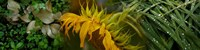 """Close-up of leaves with yellow flower by Panoramic Images - 36"""" x 12"""""""