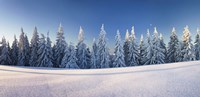 Snow covered trees on a landscape, Belchen Mountain, Black Forest, Baden-Wurttemberg, Germany Fine Art Print