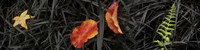 """Close-up of different leaves by Panoramic Images - 36"""" x 12"""""""