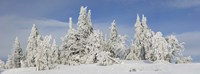 """Frost and ice on trees in midwinter, Crater Lake National Park, Oregon, USA by Panoramic Images - 36"""" x 12"""""""