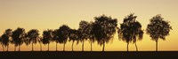 Tree alley at sunset, Hohenlohe, Baden-Wurttemberg, Germany by Panoramic Images - various sizes