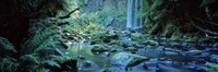 """Waterfall in a forest, Hopetown Falls, Great Ocean Road, Otway Ranges National Park, Victoria, Australia by Panoramic Images - 36"""" x 12"""""""