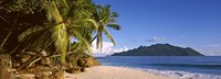 """Palm trees grow out over a small beach with Silhouette Island in the background, Seychelles by Panoramic Images - 36"""" x 12"""""""