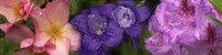 """Close-up of pink and purple  flowers by Panoramic Images - 48"""" x 12"""""""