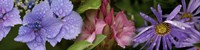 """Close-up of flowers by Panoramic Images - 48"""" x 12"""""""