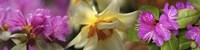 """Details of pink and yellow flowers by Panoramic Images - 48"""" x 12"""""""