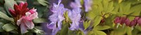 """Details of bright colors flowers by Panoramic Images - 48"""" x 12"""""""