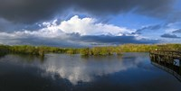"""Reflection of clouds in a lake, Everglades National Park, Florida, USA by Panoramic Images - 36"""" x 12"""""""