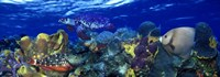 """Stoplight parrotfish (Sparisoma viride) with a Hawksbill Turtle (Eretmochelys Imbricata) underwater by Panoramic Images - 36"""" x 12"""" - $34.99"""