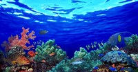 """Underwater view of Pallid triggerfish, Oriental Sweetlips and Longfin bannerfish with Yellowbar Angelfish by Panoramic Images - 36"""" x 19"""""""