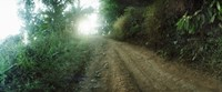"""Dirt road through a forest, Chiang Mai Province, Thailand by Panoramic Images - 36"""" x 12"""""""