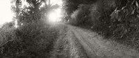 """Dirt road through a forest, Chiang Mai Province, Thailand (black and white) by Panoramic Images - 36"""" x 12"""""""