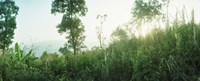 """Sunlight coming through the trees in a forest, Chiang Mai Province, Thailand by Panoramic Images - 36"""" x 12"""""""