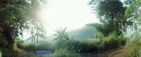 """Man with a slingshot in a forest, Chiang Mai, Thailand by Panoramic Images - 36"""" x 12"""""""
