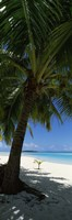 Palm tree on the beach, Aitutaki, Cook Islands Fine Art Print
