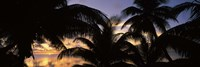 "Silhouette of palm trees at sunset, Aitutaki, Cook Islands by Panoramic Images - 36"" x 12"""
