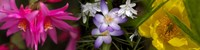 """Flowers in pastel colors by Panoramic Images - 48"""" x 12"""""""