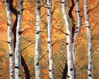 Golden Aspens Fine Art Print