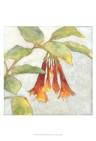 "Fuchsia Blooms I by Megan Meagher - 13"" x 19"", FulcrumGallery.com brand"