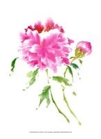 Peonies in Pink I Fine Art Print
