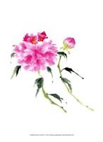 """Peonies in Pink IV by Nan Rae - 10"""" x 13"""""""
