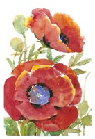 """Poppy Floral II by Timothy O'Toole - 13"""" x 19"""""""