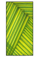 """Line Study Green by Charles McMullen - 13"""" x 19"""", FulcrumGallery.com brand"""