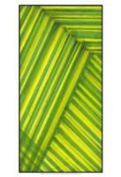 Line Study Green Fine Art Print