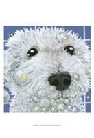 """Bubbles - Stella by Dlynn Roll - 13"""" x 19"""""""
