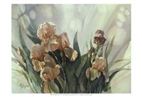 Hadfield Irises II Fine Art Print