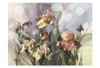 Hadfield Irises V Fine Art Print