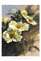 Hadfield Roses I Fine Art Print