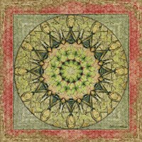 Floress Mandala I by Catherine Kohnke - various sizes