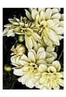 """Lemon Dahlias I by Rachel Perry - 13"""" x 19"""", FulcrumGallery.com brand"""
