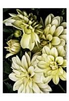 "Lemon Dahlias II by Rachel Perry - 13"" x 19"", FulcrumGallery.com brand"