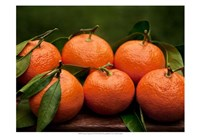 "Satsuma Tangerines II by Rachel Perry - 19"" x 13"", FulcrumGallery.com brand"