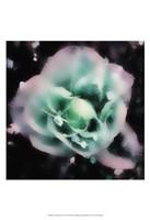 "Evening Rose I by Danielle Harrington - 13"" x 19"", FulcrumGallery.com brand"