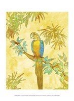"Macaw on Branch I by Catherine Kohnke - 10"" x 13"""